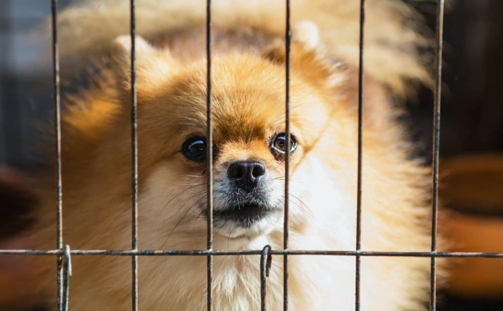 It is possible to potty train your dog without a crate
